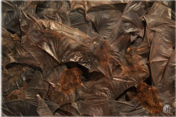 Detail of bats